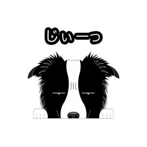 見てまステッカー【ボーダーコリー】 犬 ステッカー シール