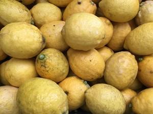 完全無農薬レモン3kg(21個前後)
