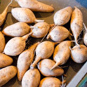 安納芋(黄金)ちびサイズ10キロ[生芋]