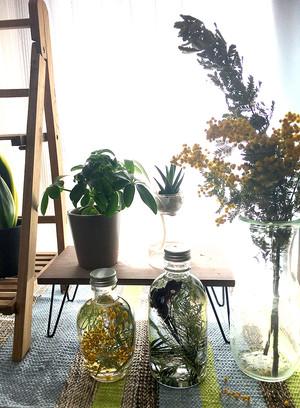 植物標本 ローズマリー
