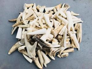 鹿ぼたん10個(加工品原料)