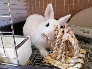 KAWAI バナナdeたこ足