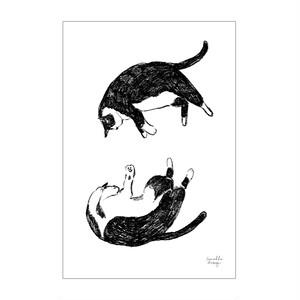 ポストカード「自由に寝るネコ」