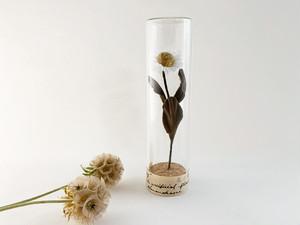 Herbarium : 染花の標本ボトル (L)【一輪デイジー】