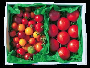 【配送開始しました】カラフルトマト/フルーツトマトのハーフ&ハーフ(小)☆約950g☆ラッピング・熨斗対応☆贈答用 高糖度トマト 出産祝い 結婚祝い 誕生日祝い 還暦祝い 内祝 お歳暮