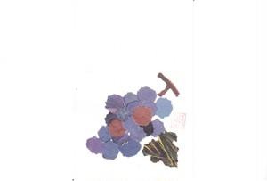 A15 葡萄