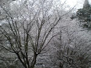 姶良市北山雪景色