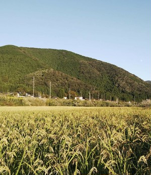 いのちの壱1kg (自然栽培)白米