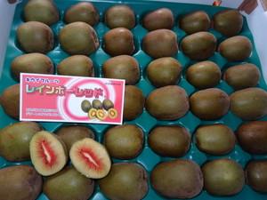 【贈答用】レインボーレッド(キウイフルーツ) 36玉(約3.6キロ)