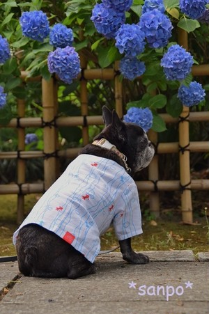 【Overseas one】Koiguchi shirt <frenchbulldog - S>Around 9 kg
