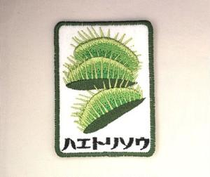 ハエトリ草■食虫植物■しかく