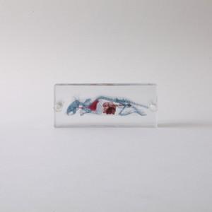 3D透明標本 マウス ネジ 3Dデータ収録USBメモリ付 A01