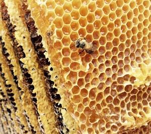 日本ミツバチの蜂蜜 非加熱 500g