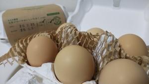 土佐ジローのおいしいたまご【6個入】 おさき農場直送