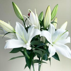 LY Lily Selection ザンベジ 3本セット (JA北魚沼)