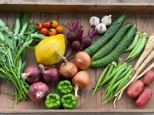 夏野菜の詰め合わせLサイズ
