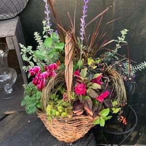 秋花のオータム籠寄せ植え