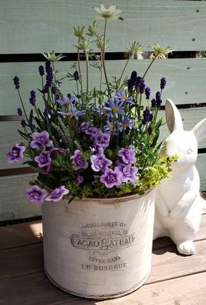 irodori からつ 四季の寄せ植え〜パープル系(中サイズ)〜※お花の種類・容器はお任せ下さい!