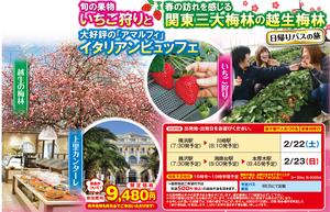 2020年2月神奈川発,越生梅林と人気のアマルフィイタリアンビュッフェに旬のいちご狩り日帰りバスツアー9480円