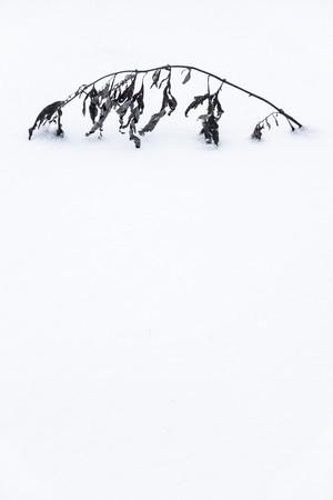 髙﨑紗弥香 / piece#5