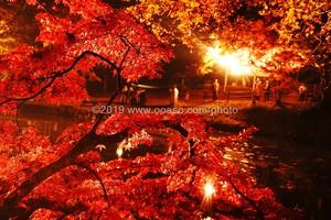 ライトアップされた秋の美しい紅葉風景