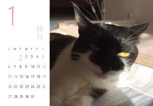 千葉ちゃんカレンダー2019