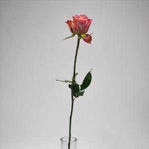Rose  テナチュール 10本 (JA静岡市)