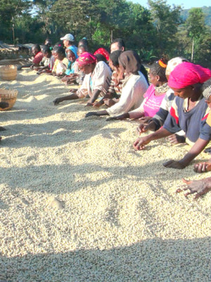 Ethiopia Yirgacheffe G/1 KONGA