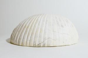 貝殻|shell