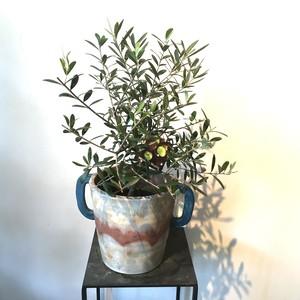 オリーブの鉢・オリジナル鉢カバー