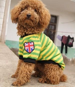 ペット服 ボーダー ペット わんちゃん ウェア パーカー 小型犬 中大型犬 グリーン