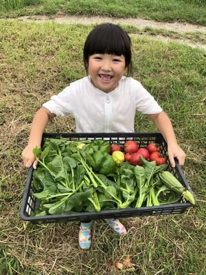 新鮮京都の地野菜Sと玉ねぎドレッシング&ジンジャーソースset