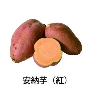 安納芋(紅)Sサイズ10キロ[生芋]