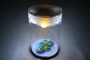 箱庭 ボトル LEDライト 泉の亀