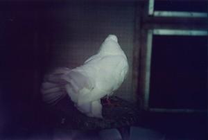 旅の合図_鳥Ⅰ  -幸本紗奈-