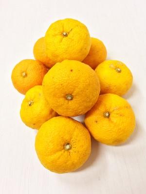 自然農柚子*500〜550g