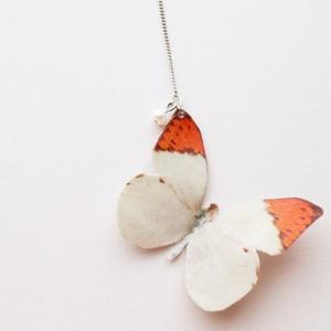 蝶々-ツマベニチョウ-