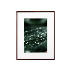 葉上の水滴と光(ホワイトボード)A4サイズ