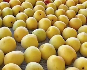 南高黄熟梅10kg箱 収穫6月1日から 受付5月1日から開始