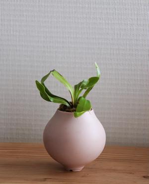 Pot. Planet S(コーラルピンク)と植物セット