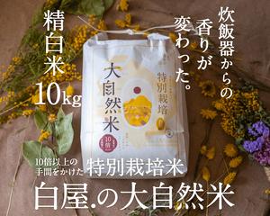 [送料無料]大自然米【10kg】精白米