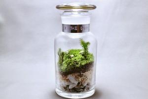 苔のテラリウム 牧場 羊たちのいる風景 薬瓶250ml