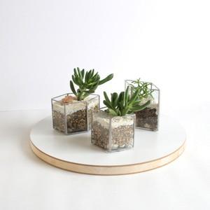 MINI PLANTER silver [多肉植物]