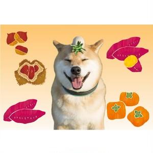 柴犬まる ポストカード ーくいしんぼうの秋まるー