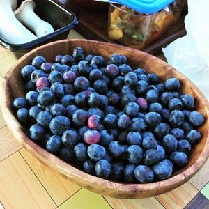 自然栽培 ブルーベリー 400g