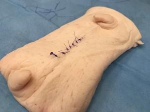 Wet lab衛生臓器 豚皮膚モデル ラージサイズ