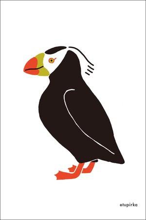 エトピリカのポストカード