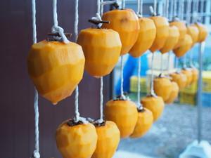 干し柿用愛宕柿 約10kg入り 11月中旬発送開始