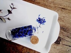植物標本 Botaical Collection■No.37-C 矢車菊 青色 花弁のみ