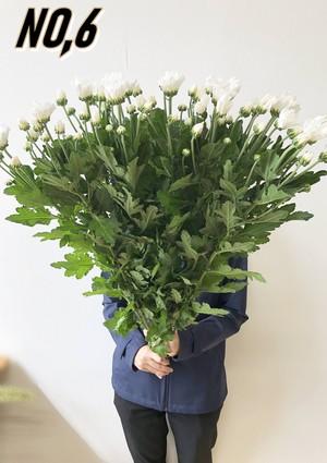★送料無料 お墓参りへ行こう!国産お供え花シェアBOX50 №3【ロスフラワー救済!】